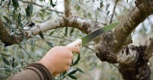 Από τον Δήμο Χανίων αύριο: Κλάδεμα δέντρων στην οδό Α. Παπανδρέου