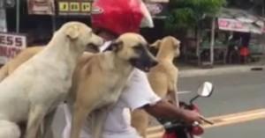 Έκανε… τετρακάβαλο με τους σκύλους του
