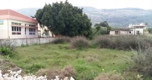 Χανιά: Βούρκα και βάτα δίπλα σε νηπιαγωγείο - Ζητούν τον άμεσο καθαρισμό