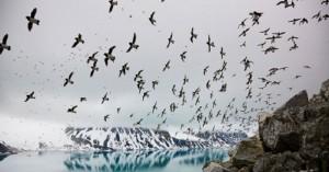 «Μαγικός» χορός των πουλιών στον αέρα!