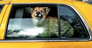 Το πρώτο pet taxi στην Κρήτη έφτασε! Γνωρίστε το…