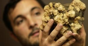 Ιταλία: Μια λευκή τρούφα της 'Αλμπα πωλήθηκε 85.000 ευρώ