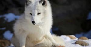 Τα χερσαία θηλαστικά κινδυνεύουν με εξαφάνιση εξαιτίας του ανθρώπου