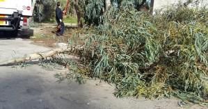 Χανιά: Από τύχη δεν είχαμε θύματα - Τρία δέντρα έπεσαν στη μέση του δρόμου