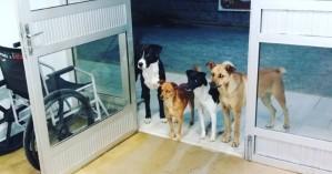 Αυτοί οι αδέσποτοι σκύλοι περίμεναν στο νοσοκομείο για ένα συγκινητικό λόγο