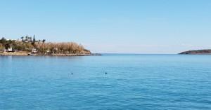 Απολαμβάνουν τη θάλασσα οι χειμερινοί κολυμβητές και οι κορμοράνοι (βιντεο)