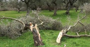 Αναγγελία για ζημιές από ανεμοθύελλα στον δήμο Πλατανιά