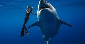 Δύτες κολύμπησαν πλάι σε έναν από τους μεγαλύτερους καρχαρίες