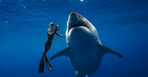 Kολύμπησαν πλάι σε έναν γιγαντιαίο λευκό καρχαρία στα ανοικτά της Χαβάης