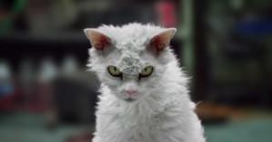 Η πιο… θυμωμένη γάτα του διαδικτύου!