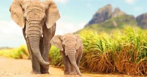 Μοζαμβίκη: Οι ελέφαντες γεννιούνται πια χωρίς χαυλιόδοντες - Πώς εξηγείται