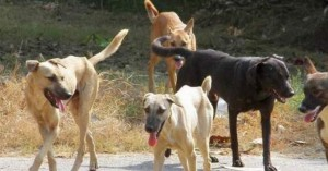 Δήμος Αποκορώνου: Στειρώσεις αδέσποτων ζώων συντροφιάς