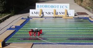 Το πρώτο ρομπότ που κινείται με… τα μάτια μυρμηγκιού