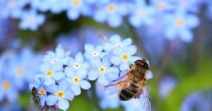 Τα έντομα οδεύουν προς τον αφανισμό και μπορεί να παρασύρουν στον όλεθρο όλο τον πλανήτη!
