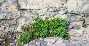 Ελληνικά αρωματικά και φαρμακευτικά φυτά που κάνουν θραύση