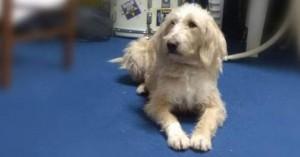Θανάτωσαν με φόλα τη μασκότ του Αστέρα Τρίπολης και άλλα 10 σκυλιά