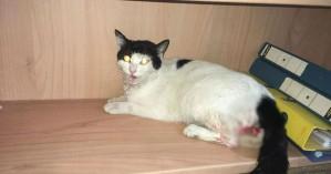 Κακοποίησαν έγκυο γάτα στα Χανιά (φωτο)