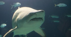 Ένας Nεοϋορκέζος κρατούσε παράνομα καρχαρίες σε πισίνα του σπιτιού του