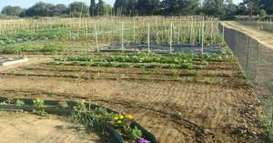 Φτιάξε το δικό σου λαχανόκηπο με τη βοήθεια του ΑΠΘ