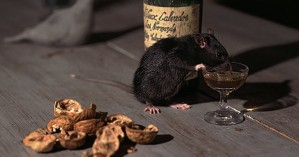 Επανάσταση: Ερευνητές θεράπευσαν τον αλκοολισμό σε πειραματόζωα