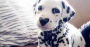 Αυτός ο σκύλος είναι αξιολάτρευτος και ο λόγος είναι προφανής