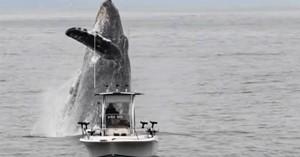 Μία φάλαινα πήδηξε πίσω από ένα ψαροκάικο και το έκανε να μοιάζει με μινιατούρα