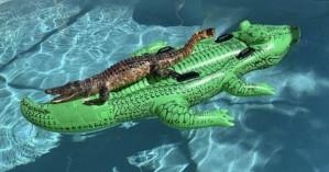 Νοίκιασαν Airbnb και στην πισίνα άραζε αλιγάτορας πάνω σε στρώμα
