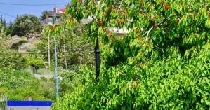 Γερακάρι Ρεθύμνου: Προορισμός Κερασοχώρι…