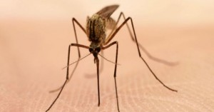 Οκτώ τρόποι για να μην σας τσιμπάνε τα κουνούπια