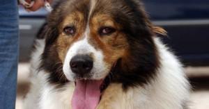 Κέρκυρα: Βαριά καμπάνα για 67χρονο που πυροβόλησε τον σκύλο του