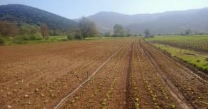 Πώς τα δασωμένα χωράφια θα γίνουν καλλιεργήσιμες εκτάσεις