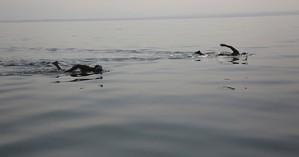 Επικίνδυνη περιπέτεια για ανήλικους που παρασύρθηκαν από θαλάσσια ρεύματα στη Σητεία