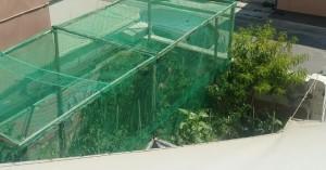 Ηράκλειο: Έκρυβε στο σπίτι του 15 δενδρύλλια κάνναβης! (φώτο)