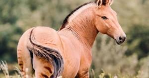 Μισή ζέβρα μισό άλογο… ένα πανέμορφο υβρίδιο ζώου