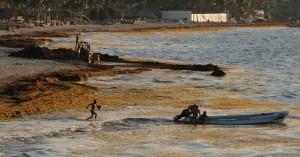 «Θάλασσα των Σαργασών»: Ένα τεράστιο νησί από φύκια