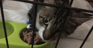 Άγνωστος πυροβολεί γάτες στα Χανιά (φωτο)