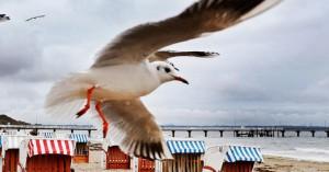 Απίστευτη ιστορία: Γλάρος απήγαγε τσιουάουα από αυλή σπιτιού -Το αναζητά η ιδιοκτήτριά του
