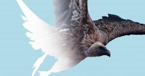 «'Άγρια πουλιά και η σχέση τους με την αεροναυπηγική» - Έκθεση στην πύλη Σαμπιονάρα