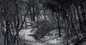 Φωτιά στην Εύβοια: Στο επίκεντρο των ερευνών οι κινήσεις των 3 υπόπτων για εμπρησμό