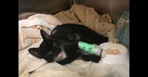 Πολύ σκληρός για να πεθάνει: Γάτος επέζησε μετά από... πλύση στο πλυντήριο ρούχων