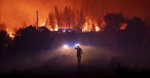 Επιστρατεύουν κατσίκες στην πρόληψη των πυρκαγιών