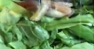 Βρήκε ένα ζωντανό πλάσμα στην έτοιμη σαλάτα που αγόρασε