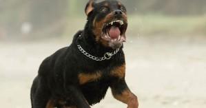 Επίθεση σκύλων σε 22χρονο στη Θεσσαλονίκη: Τον δάγκωναν με μανία σε όλο του το σώμα