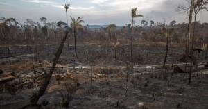Κάθε χρόνο ο πλανήτης μας χάνει ένα δάσος όσο η Βρετανία!