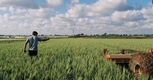 Ξεκινούν οι αποζημιώσεις στους πληγέντες αγρότες και κτηνοτρόφους του Ιανού