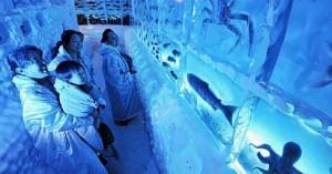 Παγωμένο ενυδρείο στην Ιαπωνία