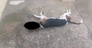 Σκυλί δηλητηριάστηκε με φόλα στη Νεάπολη (φωτο)