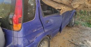 Θεσσαλονίκη: Δέντρο έπεσε πάνω σε 4 αυτοκίνητα και προκάλεσε ζημιές