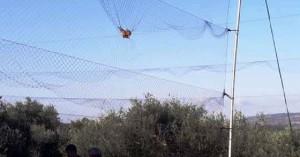 Λαθροθήρες εγκλώβισαν δεκάδες πουλιά μέσα σε δίχτυ σε ελαιώνα στην Πρέβεζα