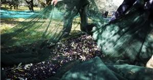 Χανιά: Ασυναγώνιστες προσφορές σε μαλακά δίχτυα ελαιοσυλλογής μέχρι εξάντλησης αποθεμάτων